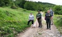 Gela_Parma_11_Orchis_mascula.jpg