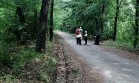 Parco_Boschi_di_Carrega_18_Gela.jpg