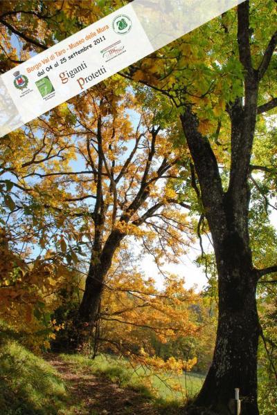Foto_albero_caratteristico_mostra.jpg
