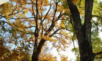 2_albero_caratteristico_mostra_-_2.jpg