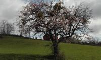 Gela_Parma_104_giornata_di_pulizia.jpg