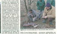 articolo_ritrovamento_carcassa_lupo_Cassio_15-01-2011.jpg